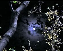 Séta a Holdfényben