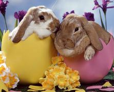 Húsvéti vigalom