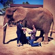 Lánykérés az állatkertben